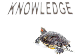 Turtle heads towards knowledge